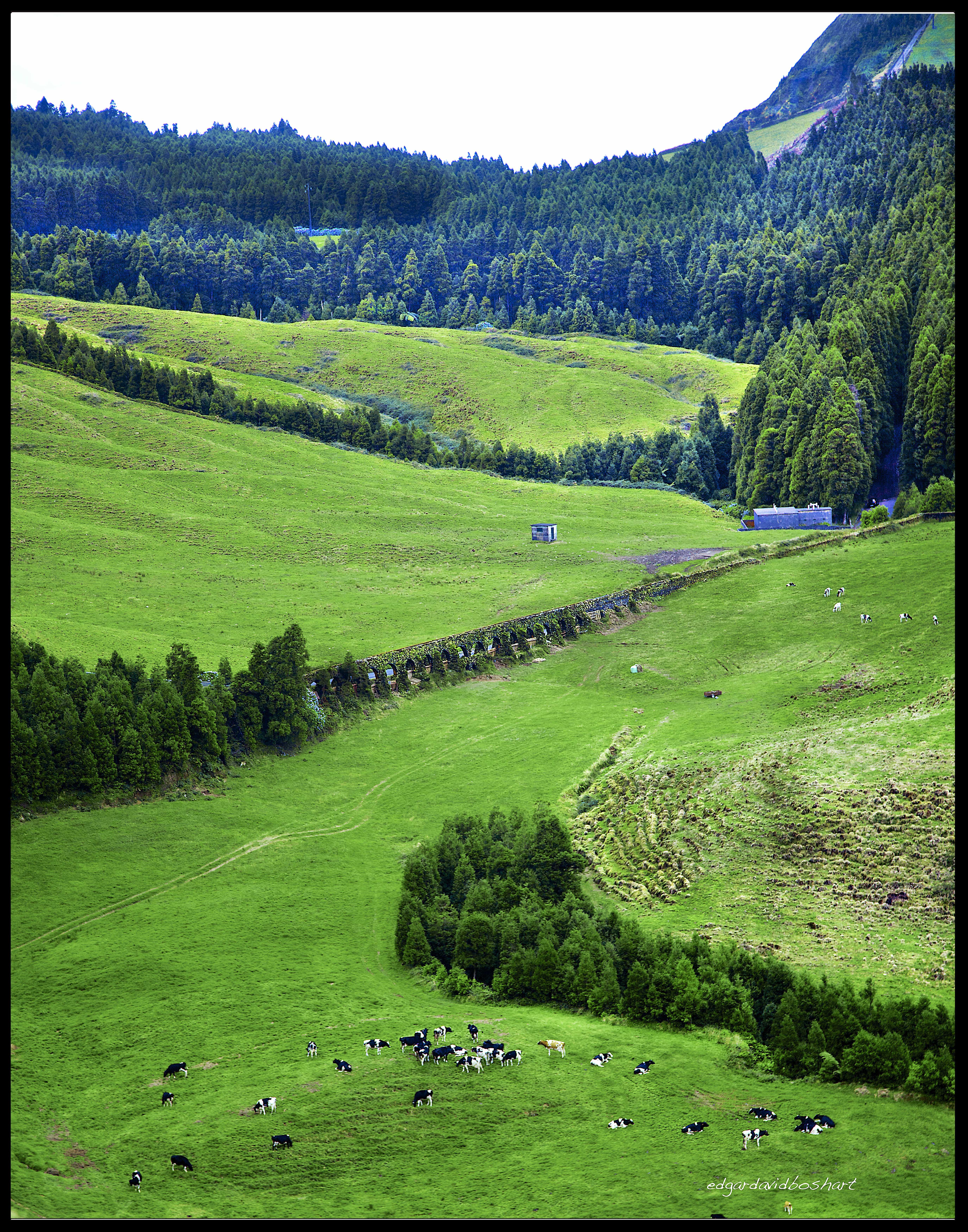 Pastures, San Miguel