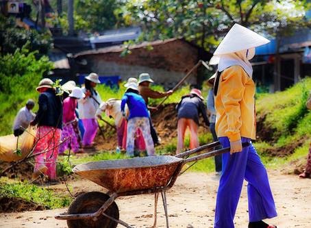 Vietnam Redo: Post-War Flowers, Fruit and Rice