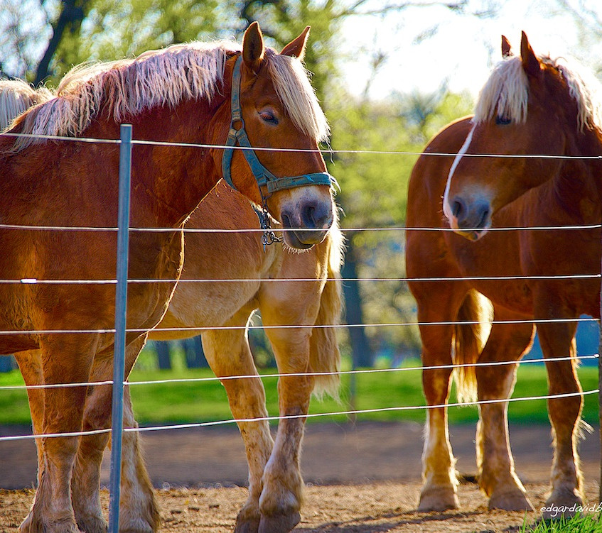 Labor Horses
