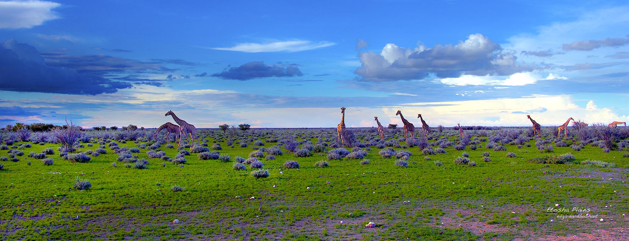 Etosha Plains