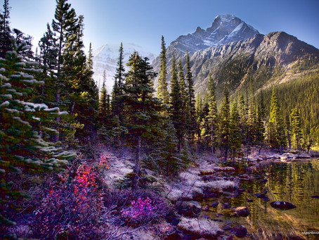 Nurture of Nature - Mount Edith Cavell