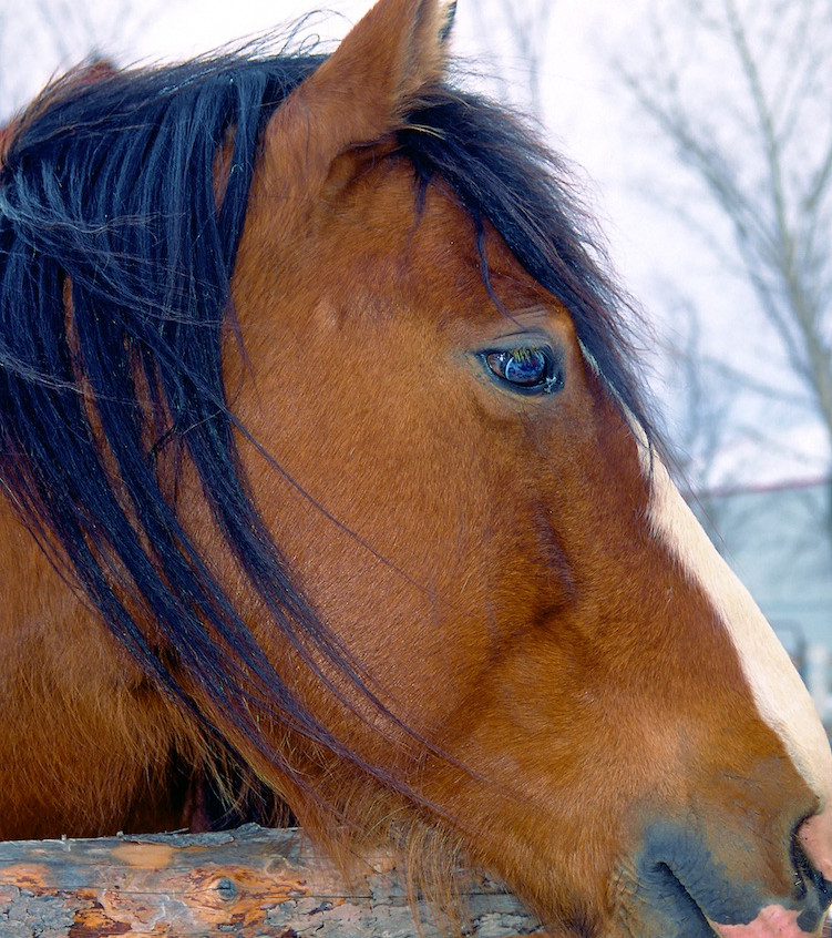 Horse Aside
