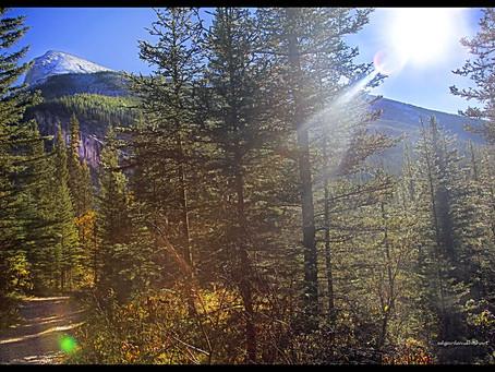 Rocky Mountain Paths, Soggy Ground (Kananaskis) Part I