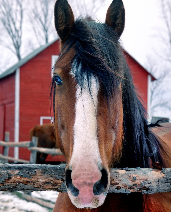 Horse and the Red Barn