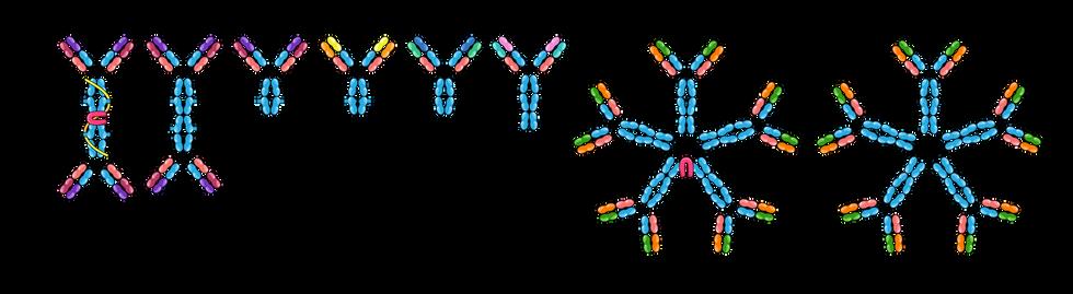 09.07_MICR 270_Antibodies.png