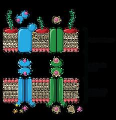 08.22_MICR 271 Mod 2 Slide 54_Bacterial