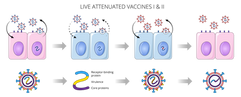 09.05_MICR 380 Mod 2_Live Attenuated Vac