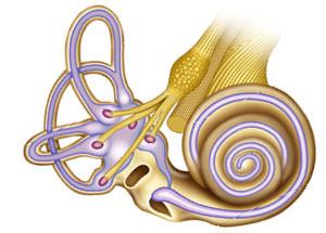 nesi_web_inner_ear_diagram_v1-1-1.jpg