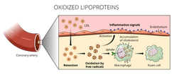 27.02.2018_BCHM270_M5_Oxidized Lipoprote