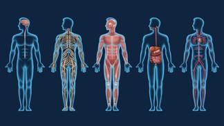 Organ Systems Mod 2.jpg