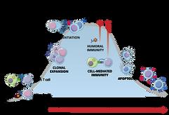09.07_MICR 270_Immune Response Graph 1.p