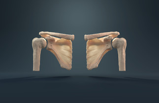 Test Glenohumeral Joint Render 6.png