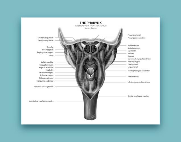 anatomy-avestarastan-05.png