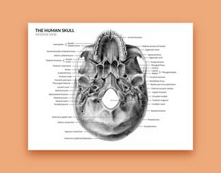 anatomy-avestarastan-02.png