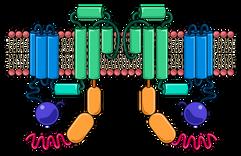 06.29_PHGY 215 Mod 1 Slide 122_Potassium