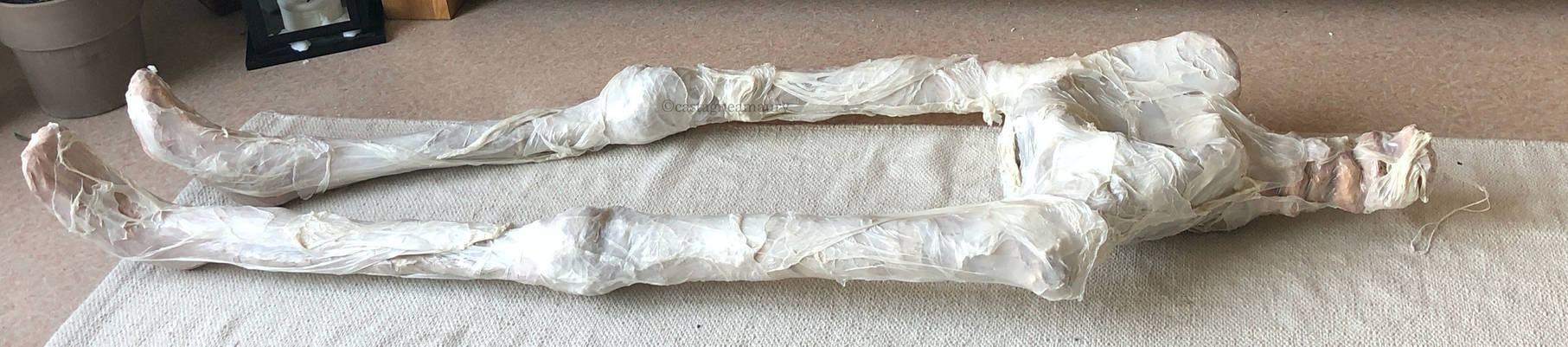 skeleton-skin-plastic-castagne-amaury-2.