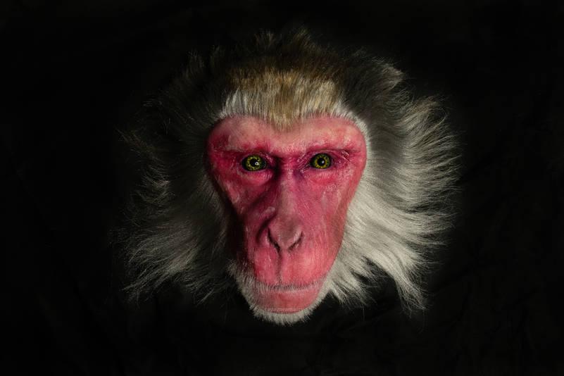 silicone-snow-monkey-sfx-castagne-amaury