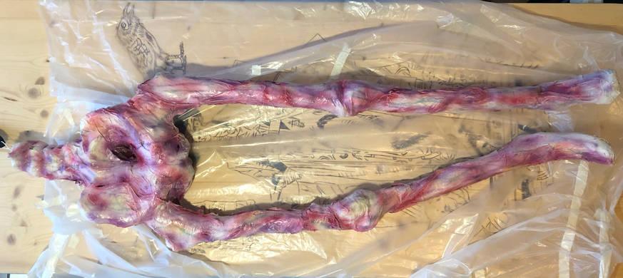 skeleton-skin-plastic-castagne-amaury-3.