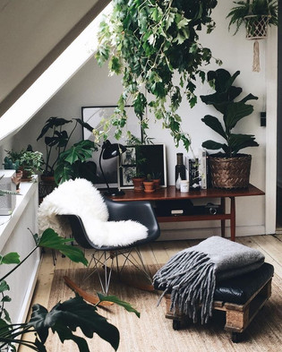 peace, decor, and a little greenery.