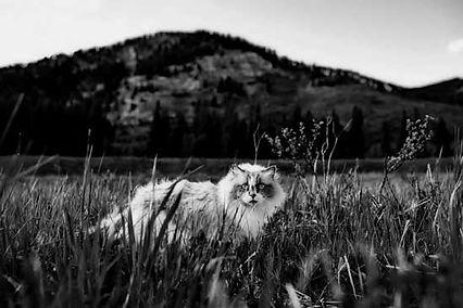 black-white3.jpg