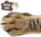 cat_hand.png