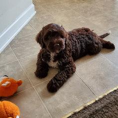 Chris puppy 1.jpeg