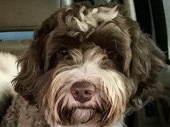 Chris Thor puppy 2.jpg