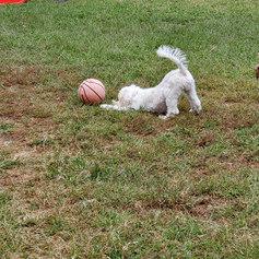 Chris puppy 5.jpeg