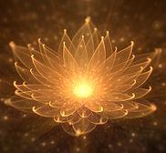 Lotus orange.jpg