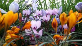 April Gardening Newsletter