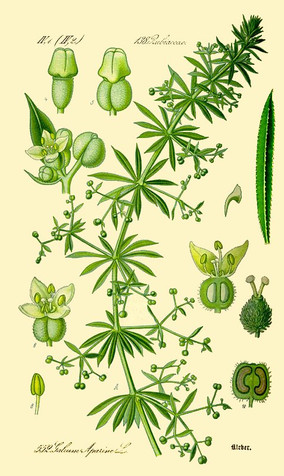 The Wonderful World of Edible Ornamentals