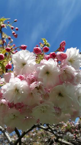 May Gardening Newsletter