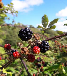 October Gardening Newsletter