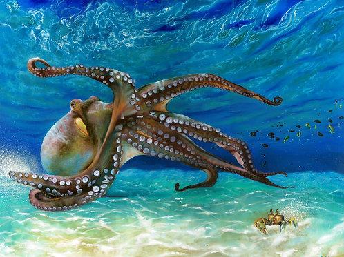 Octopus 24x30