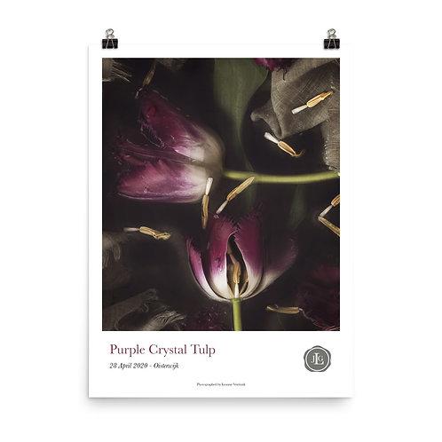 Purple Crystal Tulp Poster