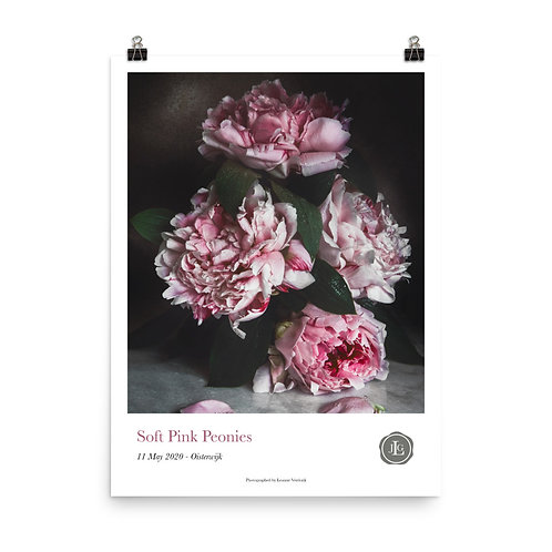 Soft Pink Peonies Poster