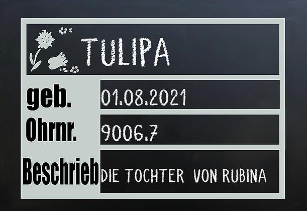 Stallschild Tulipa.png