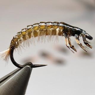 Hydropsyche Larva