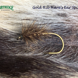 Gold Rib Hare's Ear Spider