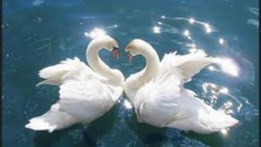 Etología. Sobre la información esencial que nos comparten los animales y la naturaleza.