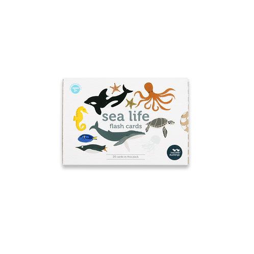 Sea Life Flash Cards