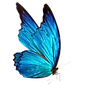 butterfly no background.png