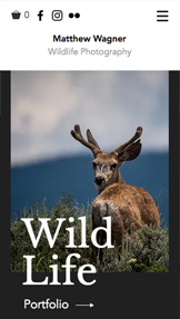 See All Templates website templates – Wildlife Photography