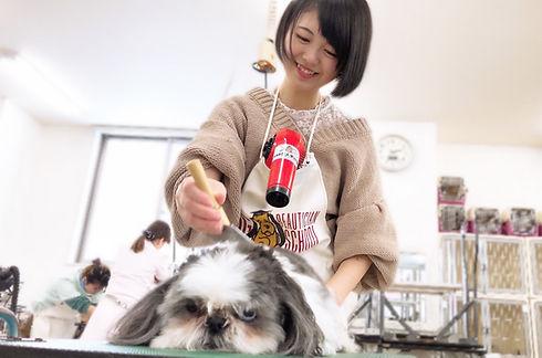 愛犬シーズトリミング.jpg
