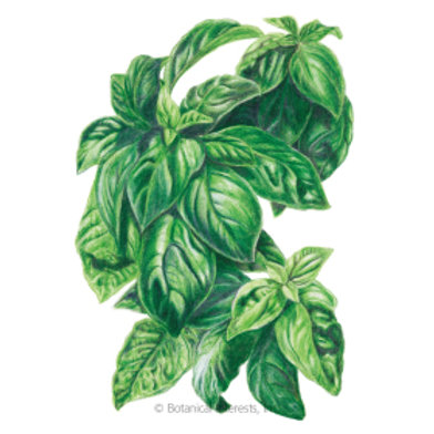 Seeds Organic Herbs