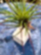 IMG_4206_edited.jpg