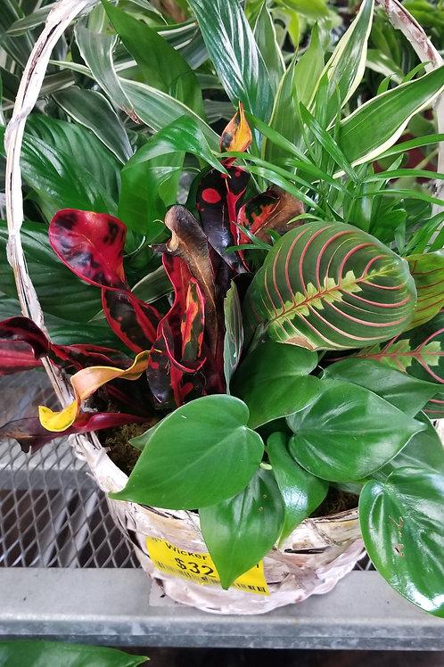 "8"" Wicker Basket Tropical Garden"