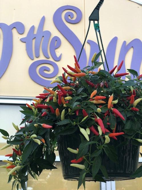 "Pepper Hanging Basket of Fire -10"""