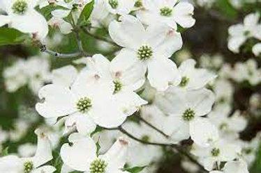 Asst. Dogwood Tree 5 gal