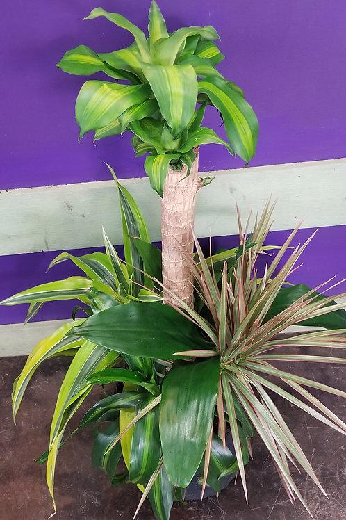 """8"""" Pot -Tall Combo Tropical"""